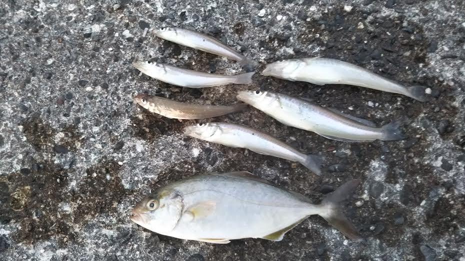 小浦港の釣り