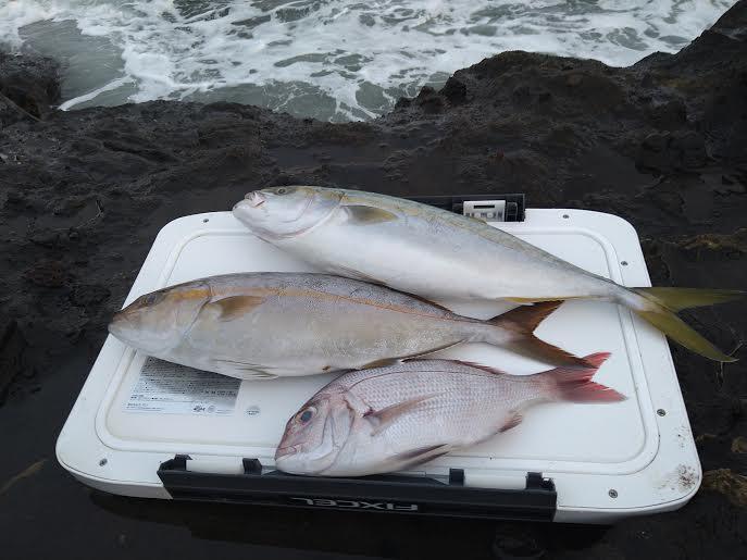 磯釣りの釣果