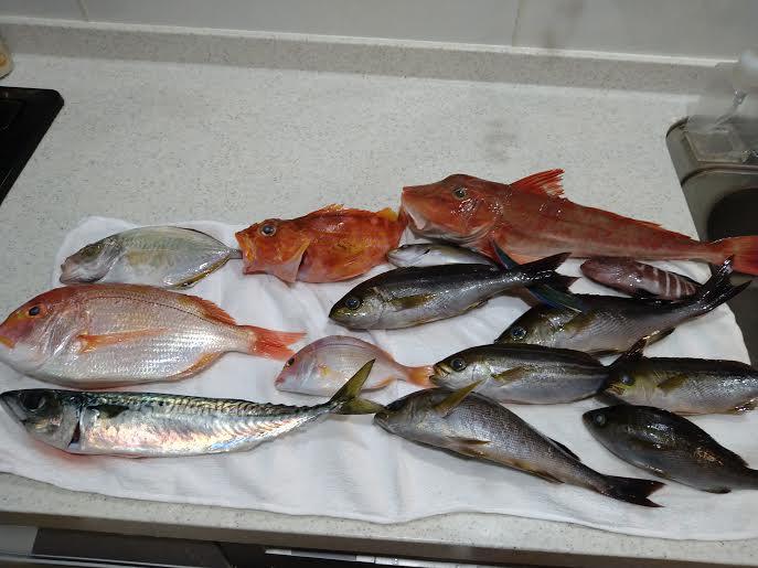 沖釣りの釣果