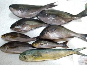 館山「海老丸」での釣果